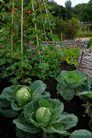 Flowerbed with Cabbages and Runner Beans