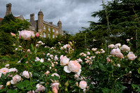 Rose Garden at Marwell