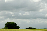 Field and Trees Under a Brooding Sky